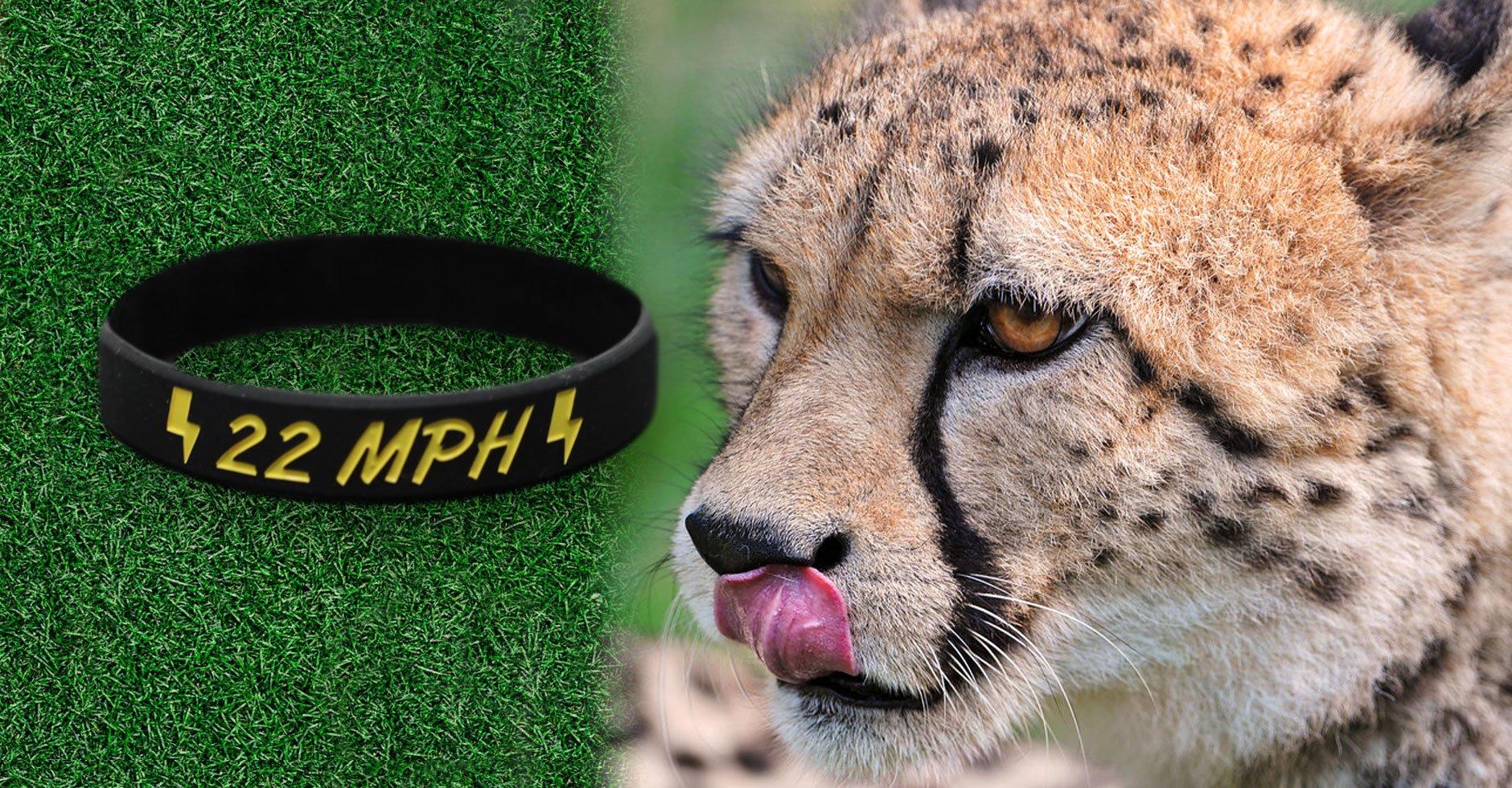 Cheetah Licking Lips At MPH Wristbands